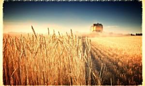 agricultura-1132x670